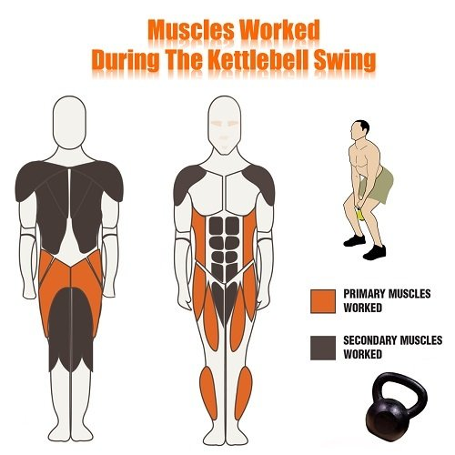 kettlebell swing muscles worked
