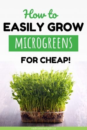 microgreen farming indoors for cheap