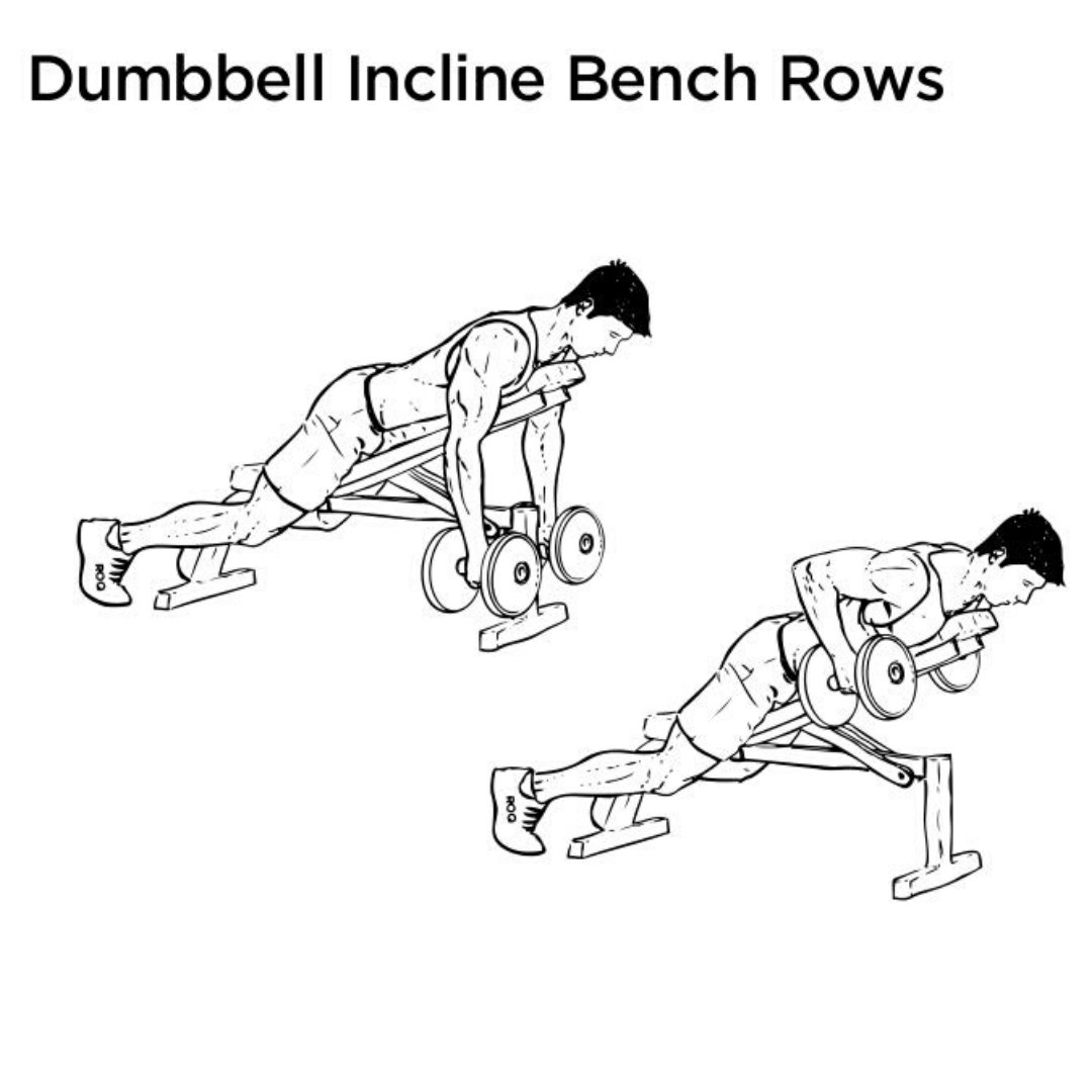 dumbbell rear delt incline bench row