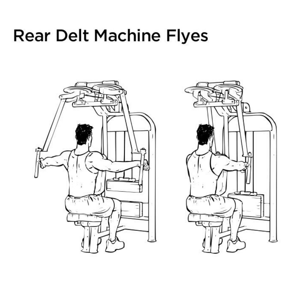 rear delt fly machine